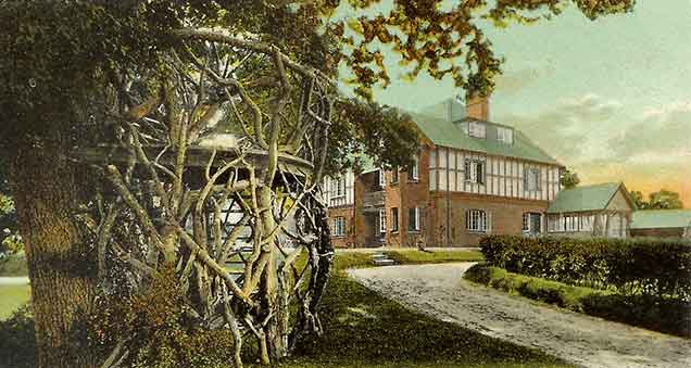 Burley - an early 20th century postcard titled 'The Tree House, Burley, New Forest'