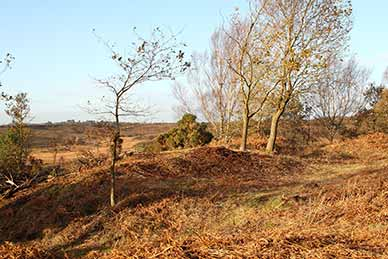 Castle Hill, Burley - the hill fort interior
