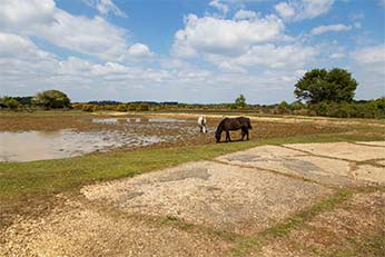 Ponies graze beside Ocknell Pond with in the foreground, the concrete of an aircraft loop standing