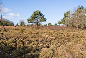 Open heathland on the edge of Winding Stonard wood, close to the location of Site Numbers 4 and 5 (cc-by-sa/2.0 - � Peter Facey - geograph.org.uk/p/711272)