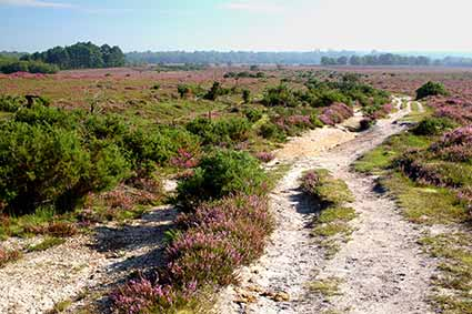 The route of the old Salt Way on White Moor