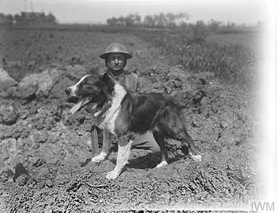 Messenger dog showing the tube in which the message was carried. He is with his dog handler of the Royal Engineers (Signals) at an Army Veterinary Corps HQ Kennel near Nieppe Wood, 19 May 1918. © IWM (Q 10958)