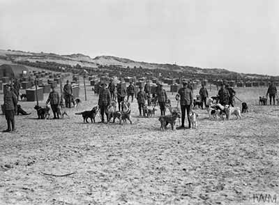 A group of dog handlers stand with their dogs at the British Army kennels near Etaples, 20 April 1918. The rows of kennels can be seen behind them. © IWM (Q 29549)