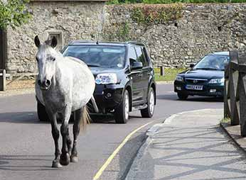 New Forest Villages - a Beaulieu traffic jam