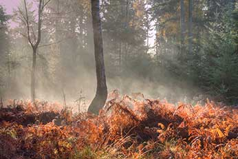 Early morning mist in Hursthill Inclosure