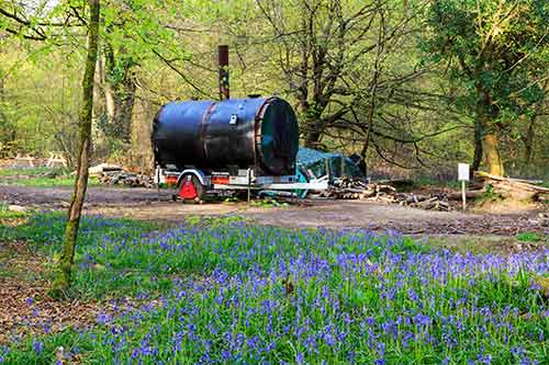 Bluebells in Pondhead Inclosure - the modern-day charcoal burner is in the background