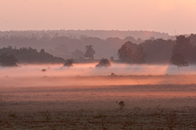 Early morning mist on White Moor at dawn, lit and coloured by the slowly rising sun