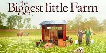 Niggest Little Farm