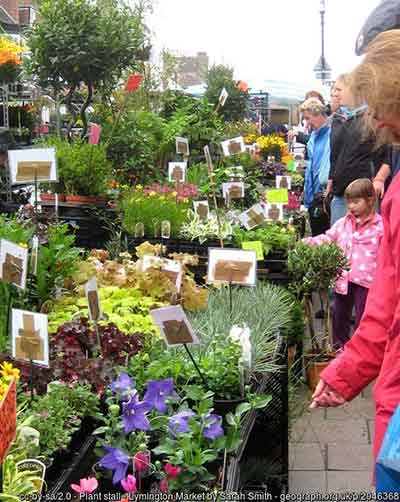 A colourful plant stall on Lymington Market