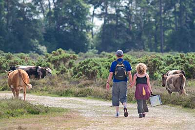 Walkers in the New Forest are always likely to encounter ponies or cattle