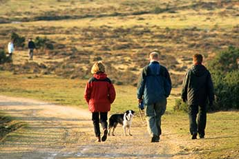 Walkers in the New Forest - it's always advisable to stay on the main tracks