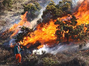 New Forest heathlands: heathland burning