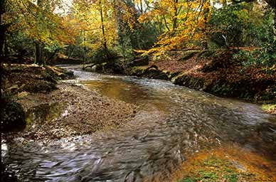 New Forest streams: Highland Water