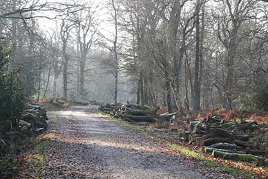 New Forest broadleaved inclosures: Hursthill Inclosure